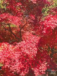 紅葉🍁の写真