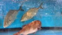 この間寿司屋さん行った時の魚たちです🐟の写真