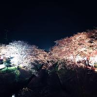 お花見🌸の写真