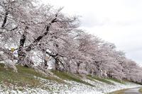 一気に春らしい気温になった!の写真