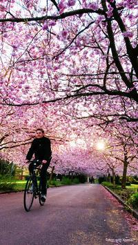 もう少しで春ですね🎵出会いと別れの季節がまた来ますね🎵ゲロッパでいちゃいちゃしましょー♥️の写真