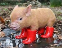 こんにちは梅雨☔の写真
