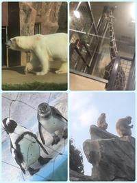 動物🦒の写真