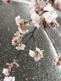 この間の雪凄かったですね!の写真