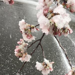 この間の雪凄かったですね!の写真1枚目