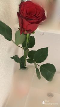 薔薇🌹✨の写真