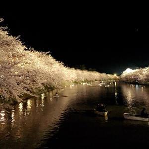 こんばんわ🐯💜 地元の桜です🌸の写真1枚目