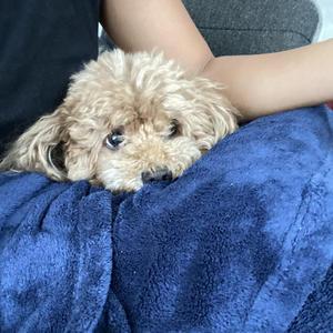愛犬の写真1枚目