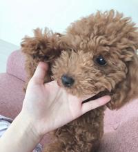 Lea♡の写真