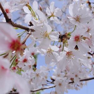 あ゛〜春ですね暖かい♨️の写真2枚目