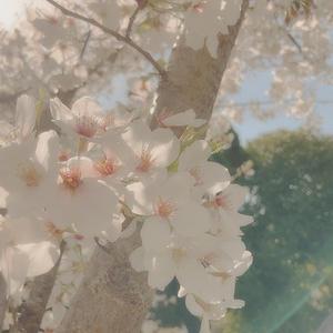あ゛〜春ですね暖かい♨️の写真1枚目