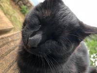 猫ちゃんかわええの写真