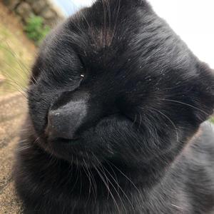 猫ちゃんかわええの写真1枚目