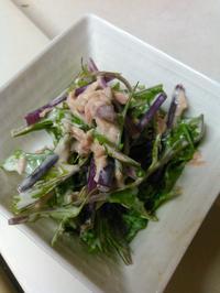 水菜の写真