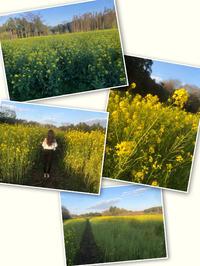 菜の花畑💓の写真