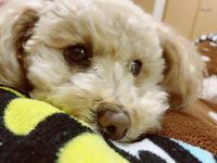 今日は起きたら隣に愛犬がいて可愛かった〜🥺♡の写真