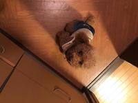 初めてから食べ物の投稿しかしてないから今回はうちの愛犬🐶の写真