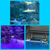 水族館🐬🐟🐠の写真