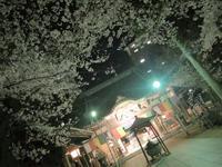 3月28日ˊᵕˋ)੭の写真