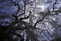 °。✧春分、雷乃発声°。✧の写真