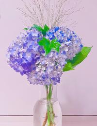 6月の花といえば💠の写真