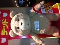 Tedの写真