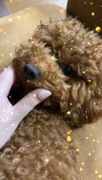 今日は愛犬のマロンくんの1歳のお誕生日でした❣️の写真