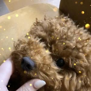 今日は愛犬のマロンくんの1歳のお誕生日でした❣️の写真1枚目