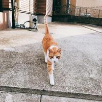 近所の猫ちゃん可愛かった🐈💗の写真
