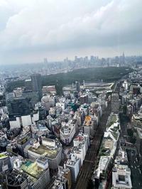 渋谷の1番高い所??の写真
