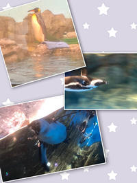 水族館🐠の写真