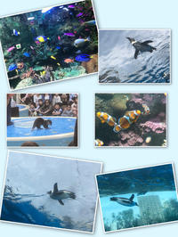 水族館🐟の写真