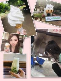 向日葵〜🌻の写真