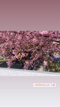 最近桜咲いてて綺麗なのの写真