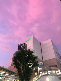 ピンクの写真
