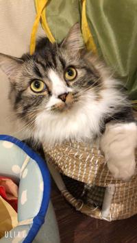 猫カフェの写真