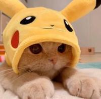 猫アレルギーですの写真