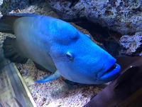 水族館♡の写真