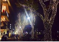 表参道のイルミネーション♡の写真