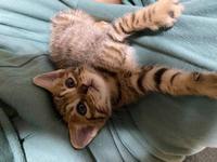 こんばんわ!れんです!🐍の写真