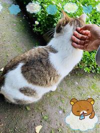 今日はお休みで実家に帰った時、野良猫ちゃんと仲良くなりました(∩˃o˂∩)♡の写真