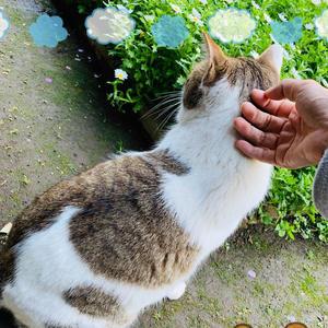 今日はお休みで実家に帰った時、野良猫ちゃんと仲良くなりました(∩˃o˂∩)♡の写真1枚目
