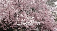 3月21日ˊᵕˋ)੭の写真