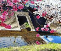 春🌸✨の写真